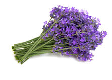 Bunch of lavender Royalty Free Stock Photo