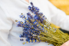 Bunch of lavender. With blurred background Stock Photos