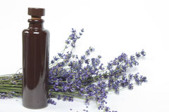 Bunch of lavender with a bottle of oil Royalty Free Stock Photo