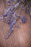 Bunch of lavender flowers Stock Photos