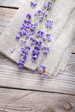 Bunch of lavender flowers with ladybird  on an old wood table Royalty Free Stock Photos