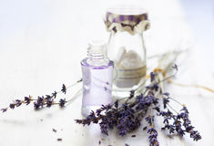 Bunch of lavender flowers Royalty Free Stock Images