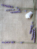 Bunch of lavender flowers on sackcloth background Royalty Free Stock Images
