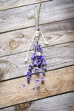 Bunch of lavender flowers with snail  on an old wood table Stock Image
