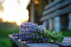 Bunch of lavender flowers on summer evening sunset. Bunch of lavender flowers on a summer evening sunsetr Stock Photo