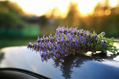 Bunch of lavender flowers on summer evening sunset. Bunch of lavender flowers on a summer evening sunsetr Royalty Free Stock Images