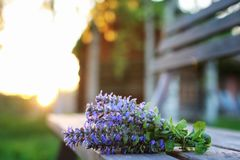 Bunch of lavender flowers on summer evening sunset. Bunch of lavender flowers on a summer evening sunsetr Royalty Free Stock Image