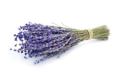 Bunch of lavender flowers Royalty Free Stock Image