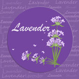 Bunch of lavender flowers violet blossom garden aromatic bloom. Royalty Free Stock Photos
