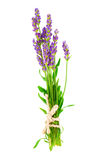 A bunch of lavender flowers. On a white background royalty free stock image
