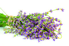A bunch of lavender flowers on a white background Stock Image