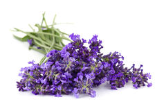 Bunch of lavender flowers Stock Photography