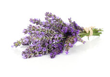 Bunch of lavender flowers Royalty Free Stock Photo