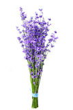 Bunch of lavender flowers on white background Royalty Free Stock Photos