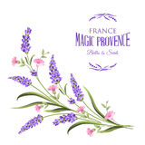 Bunch of lavender flowers. Bunch of lavender flowers on a white background.Botanical illustration. Vintage style. Making gifts of paper and textiles. Vector vector illustration