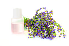 A bunch of lavender flowers on a white background with oil Stock Photography