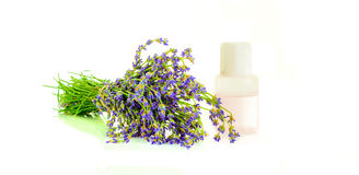 A bunch of lavender flowers on a white background with oil Royalty Free Stock Image