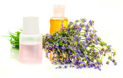 A bunch of lavender flowers on a white background with pink and orange oil Stock Images