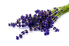 Bunch of lavender flowers  on white. Calmness and relaxation. Royalty Free Stock Photography