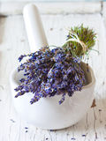 Bunch of lavender. Royalty Free Stock Photography