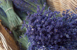 Bunch of lavender flowers Stock Photo