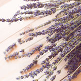 Bunch of lavender flowers Stock Images