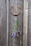 Bunch of lavender hanging old wooden wall and rusty horseshoe Royalty Free Stock Photography