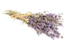Bunch of lavender isolated on white background Stock Photo