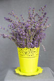 Bunch of lavender in a pot Royalty Free Stock Images