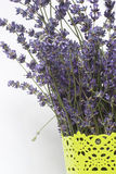 Bunch of lavender in a pot. On a white background royalty free stock images