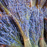 Bunch of lavender, Provence Stock Photos