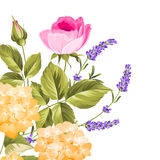 Bunch of lavender and rose flowers. Stock Images