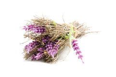 Bunch of lavender on white background Stock Images