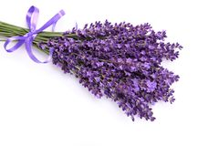 Bunch of lavender. Royalty Free Stock Photos
