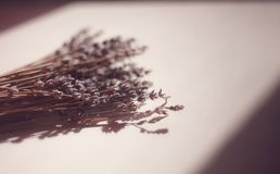 Lavender in warm light laying on the white table. royalty free stock images