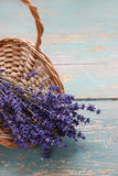Bunch of lavender in wicker basket Stock Images