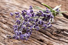 Bunch of lavender. Stock Images