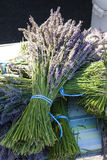 Bunch of lavenders Royalty Free Stock Image