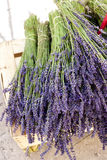 Bunch of lavenders Stock Image
