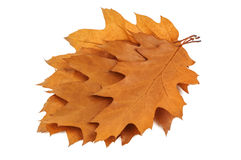Bunch of leaves Stock Images