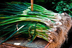 Bunch of leeks Royalty Free Stock Images