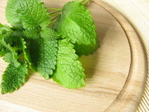 Bunch of lemon balm Royalty Free Stock Photography