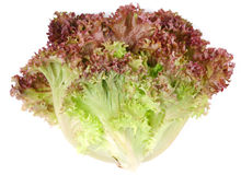 Bunch lettuce leaves Royalty Free Stock Image