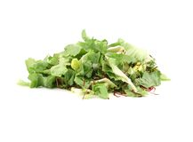 Bunch of lettuce leaves and beet. Royalty Free Stock Photo