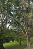 bunch liść małp srebro Zdjęcie Royalty Free