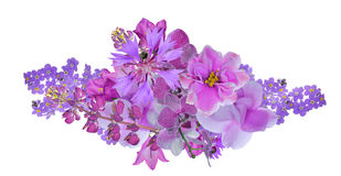 Bunch of lilac flowers isolated on white Royalty Free Stock Photos
