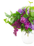 Bunch of Lilac flowers in pot Royalty Free Stock Images