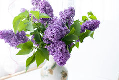 Bunch lilac flowers in vase Royalty Free Stock Image