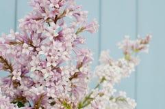 Bunch of lilac Stock Photos