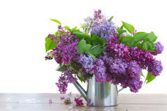 Bunch of Lilac in watering can Stock Photos